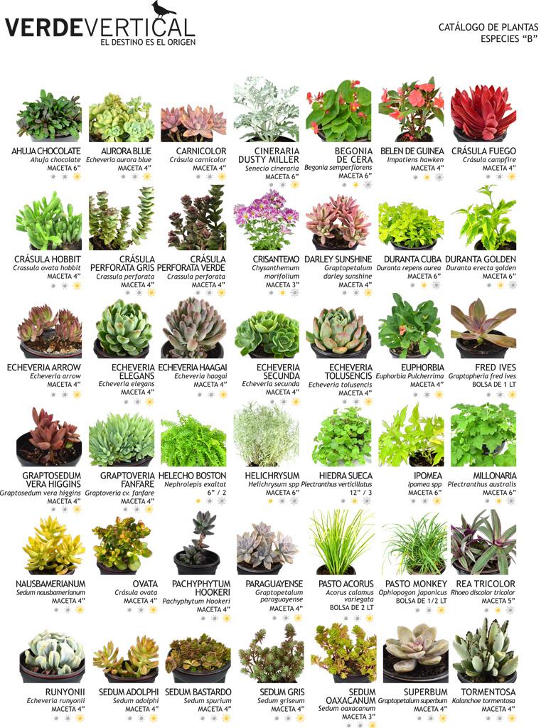 Paleta vegetal jardines verticales Tipos de plantas para jardines verticales